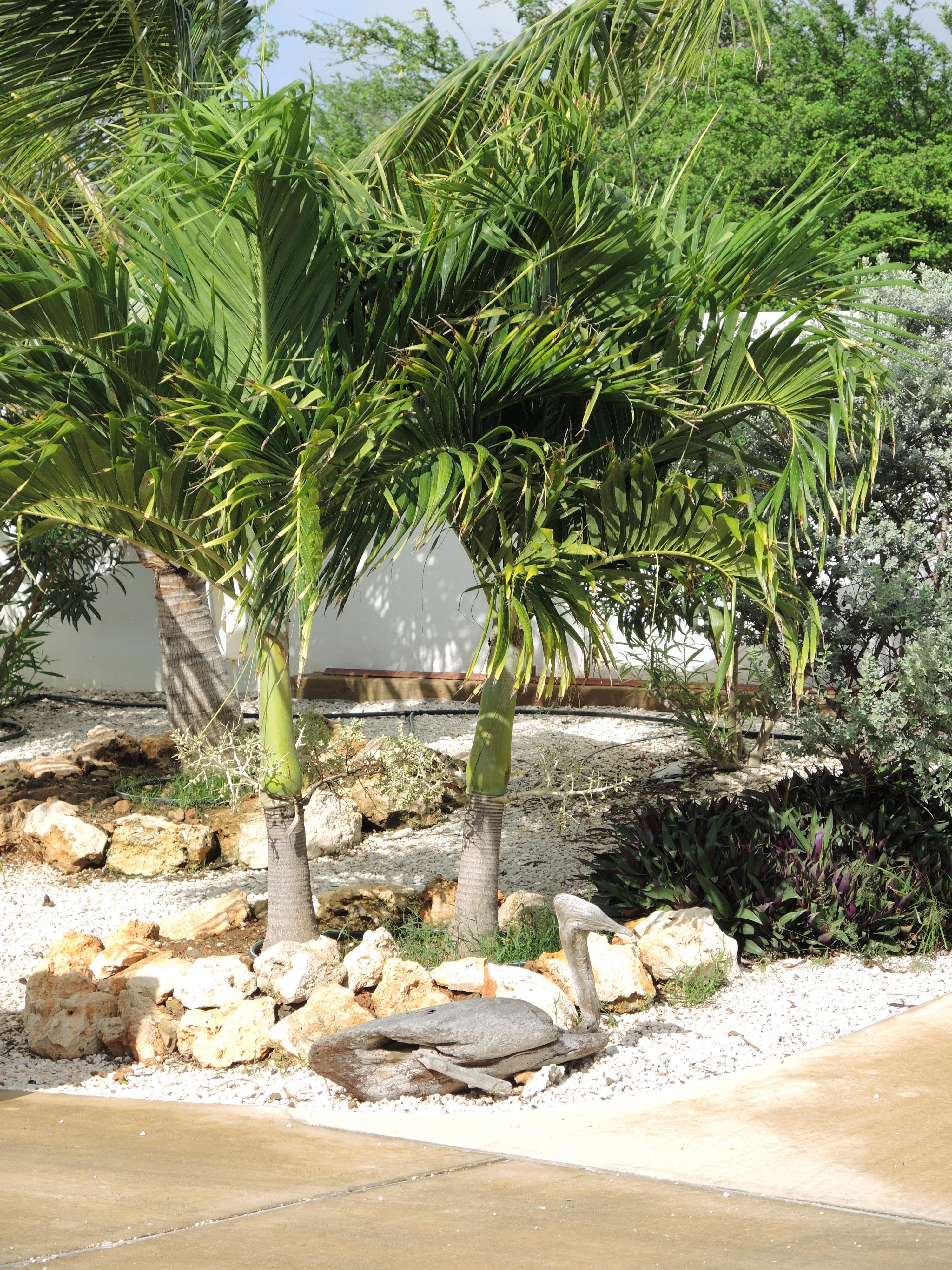 Driftwood art in the tropical garden
