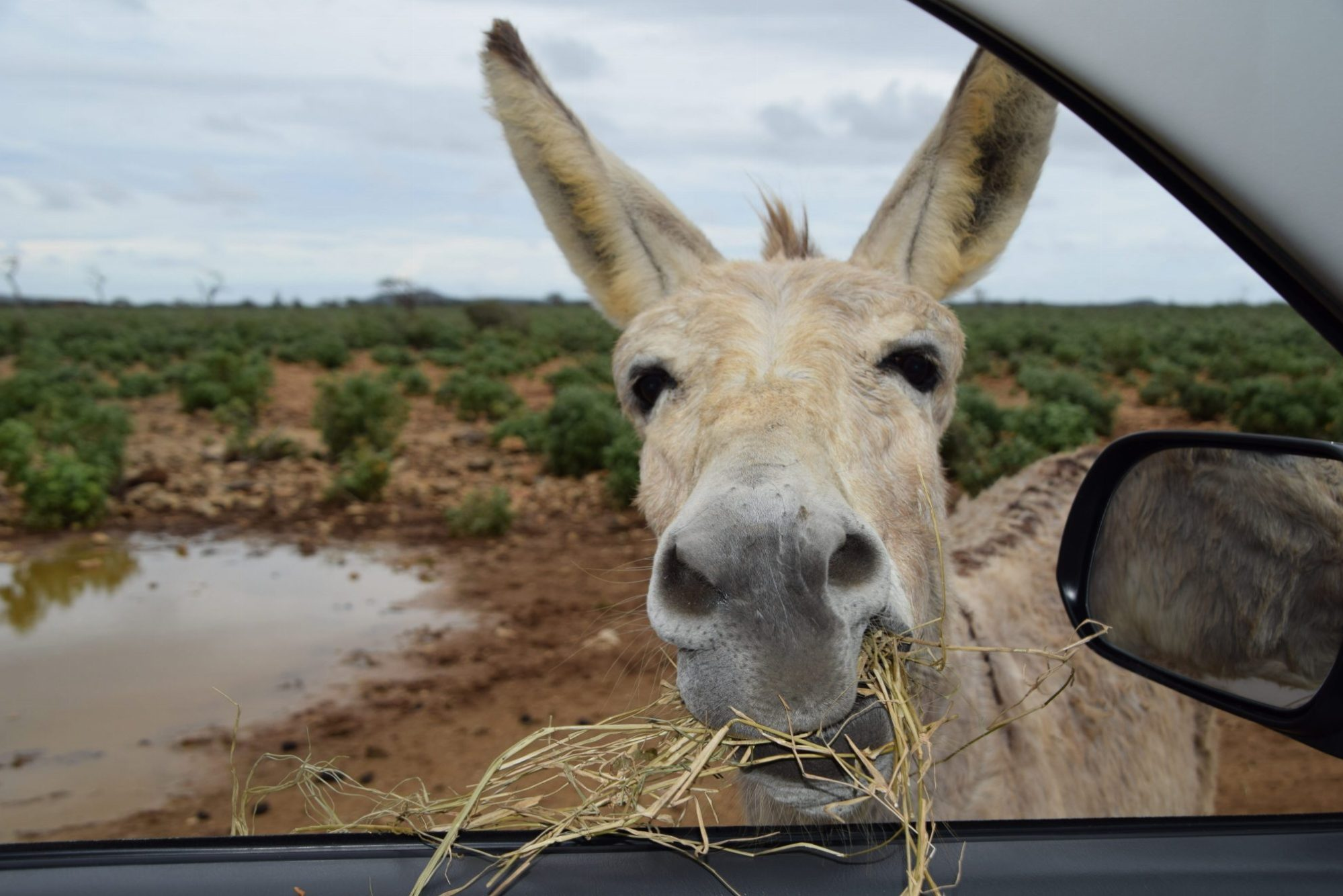 Visit the Donkey Sanctuary Bonaire