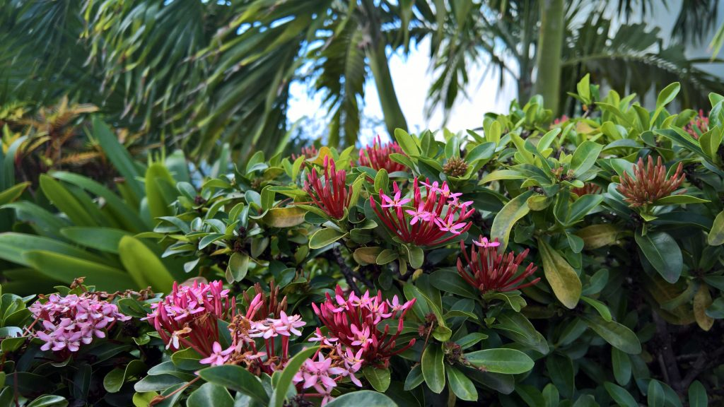 Flowers in the tropical garden